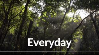Video-Everyday